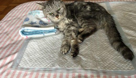 老猫の摘便その後|便秘フード中止&買ったもの<防水シーツ・サニーナ・プラチナ乳酸菌>