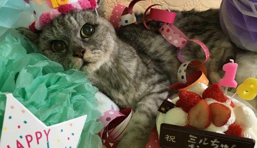 【動画あり】ミル18歳の誕生日を迎えました!