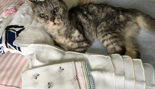 老猫のお世話にガーゼハンカチ買った&寝起きにした可愛すぎること