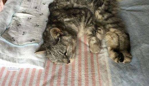 老猫の身体のこわばりがたまに取れる件
