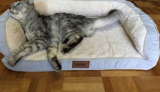 【動画あり】老猫にぴったりのペットベッドじゃなくてソファー買った