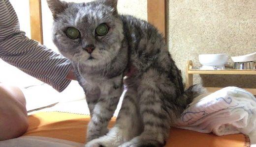 1日3回歩くリハビリ&今冬の老猫どう寝る?