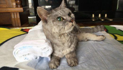 【老猫の便秘】うんち出ない記録更新!動物病院で摘便