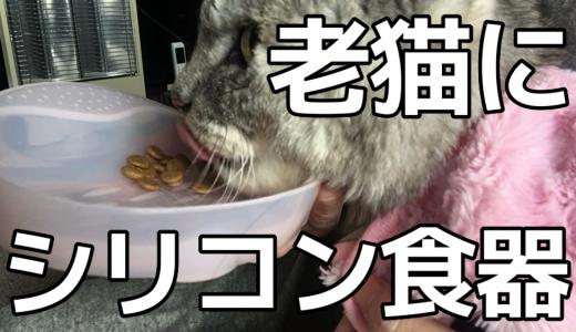 【動画あり】食べるのが苦手になった老猫に『やわらかシリコン食器』