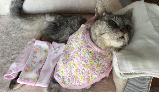 【動画あり】老猫の食事に西松屋のスタイ買って飼い主大興奮