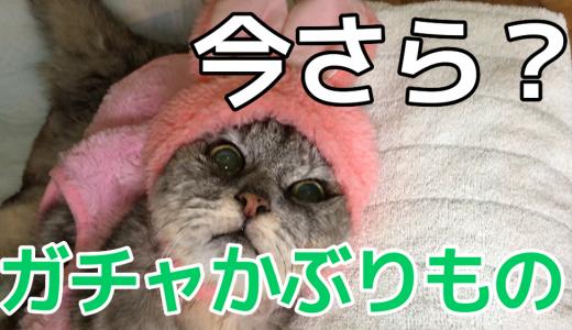 【動画】鏡餅かぶったついでにガチャ猫かぶりものシリーズvol