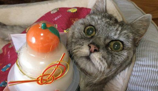 【動画あり】2020年元旦 猫と飼い主のご挨拶