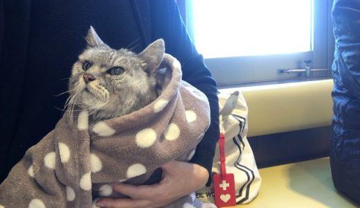 定期の動物病院受診|老猫脳炎の治療ここが限界?絶対もう一度歩かせてやりたい!