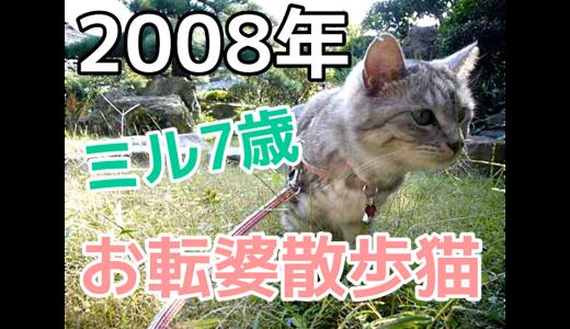蔵出し動画【2008年ミル7歳】お転婆猫の散歩風景|登るの大好き散歩猫