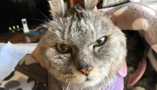 【動画あり】ひさびさ猫の百面相|ライオン丸→モヒカン→うさぎ→スコ・・・