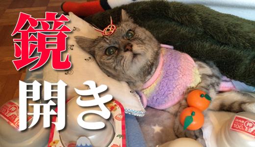 【動画】遅すぎる鏡開きに付き合わされる老猫