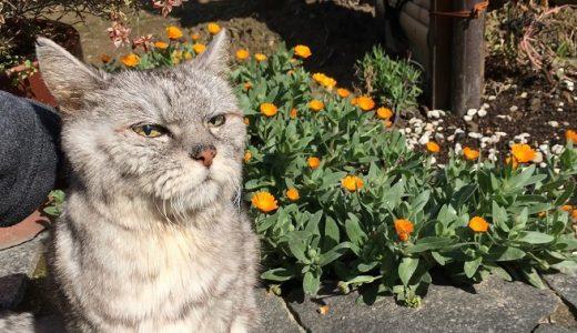 2020春が来た!抱っこで庭を散歩する猫|動画あり