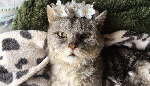 2020桜 毎年恒例の猫に桜の冠|動画
