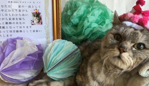 【老猫ミル18歳】日本動物愛護協会から長寿表彰状を頂きました!|動画