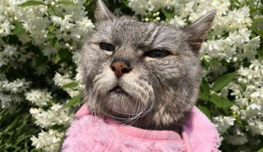 【2020 猫と花水木 vol.2】他の花も~コガネノウゼン・ヒメウツギ|動画