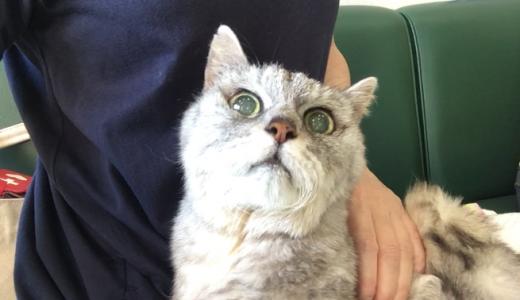 53時間『おしっこ出ないさん』前の前の動物病院へ行く|動画