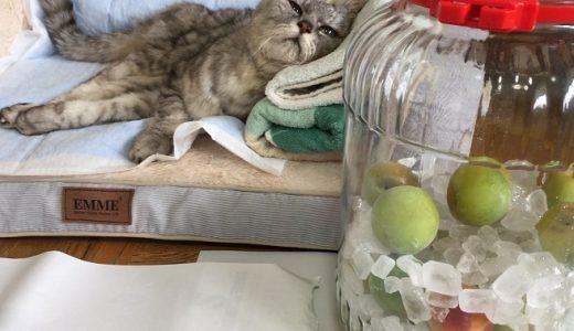 【2020 梅シロップ】今年は老猫と一緒に漬けました|動画