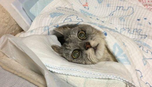 変わってしまった老猫の鳴き声とおやつ食べてるところ|動画