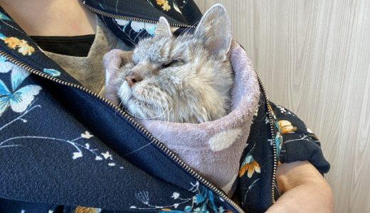 【老猫退院後】皮下点滴の通院『甲状腺機能亢進症』の検査をしてみたところ