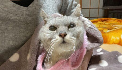 【入院→退院】長時間の下痢でショック状態に近くなった老猫