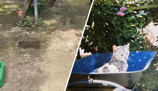 【愛猫と出会った日】ミルに言ってなかったこと|ペットロスの日々