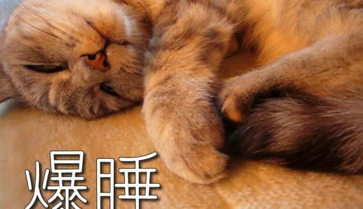 【蔵出し2007~10】ハロゲンヒーター大好き!瞬膜出して爆睡する猫