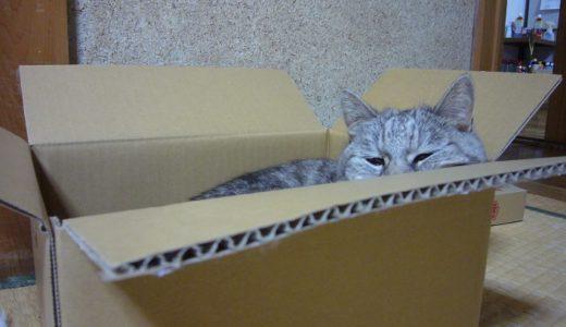 【過去動画】箱があれば入る猫|ついつい齧っちゃう